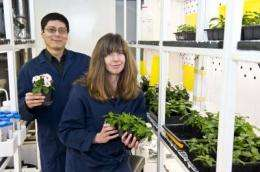 Gateway enzyme for chemicals from catnip to cancer drug
