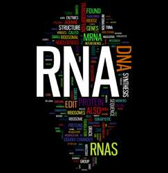 Gene regulation through non-coding RNAs