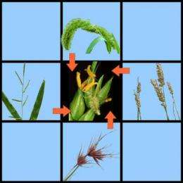 Genes may travel from plant to plant to fuel evolution