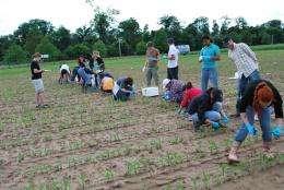 Genetic fingerprint reveals new efficient maize cultivars