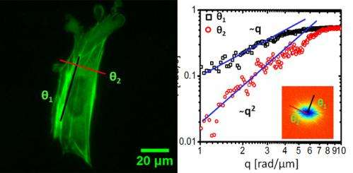 Giving fluorescence microscopy new power to study cellular transport