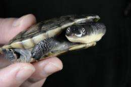 Global effort launched to save turtles from extinction
