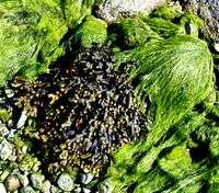 Grazing snails rule the waves: marine study