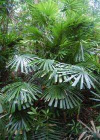 Scientists at NYBG add 81 new species to the catalog of plant life on Earth