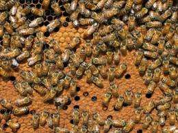 Honey bees in France