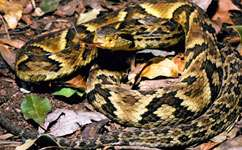 Insight into snake venom evolution could aid drug discovery