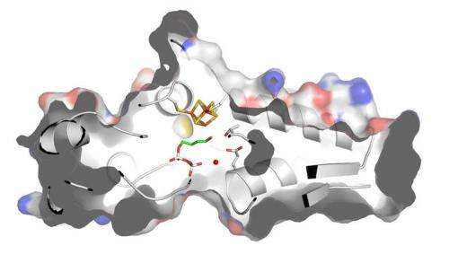 IspH -- a protein free to choose its partners