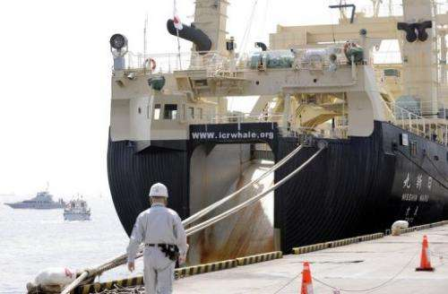 Japan claims the hunt is necessary to substantiate its view that the world had a robust whale population