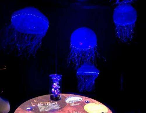 "Jellyfish are on display as part of the ""Creatures of Light: Nature's Bioluminescence"" exhibit"
