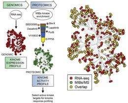 Kinase test may yield big gains for drug-resistant cancers
