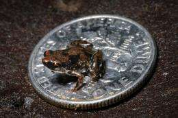 New frog species is world's smallest vertebrate