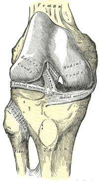 Knee injuries in women linked to motion, nervous system differences