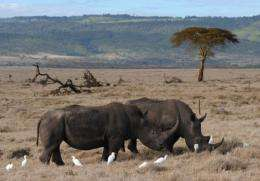 Last year 448 rhinos were killed compared to 13 animals in 2007