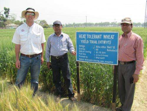 Leaf wax may prevent heat stress in wheat