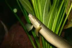 Living fossils reveal secrets of evolution