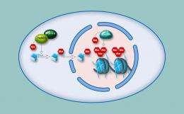 Making and breaking heterochromatin