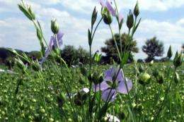 Many people in Lithuania are called Linas or Lina, named after the flax, or linseed, plant