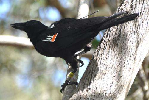 Mapping the social networking of birds