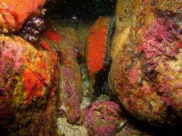 Marine reserves aid ecosystem recovery after environmental disasters