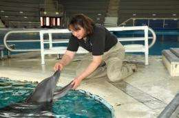 Mercury in dolphins: Study compares toxin levels in captive and wild sea mammals
