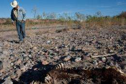 Mexican farmer Ever Mendoza walks next to a carcass in Satevo, Chihuahua state in 2011