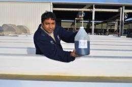 Microalgae 'bulging with biofuel potential'