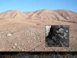 Microbial oasis discovered beneath the Atacama Desert