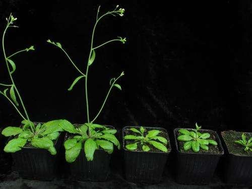 MicroRNAs in plants: Regulation of the regulator