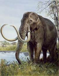 Mini-mammoths lived on Crete: scientists