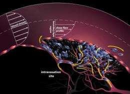 Modeling metastasis