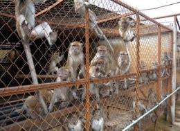 Monkeys from Laos farms are being sold to companies in China and Vietnam