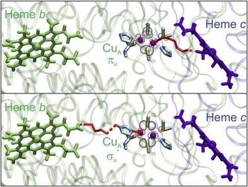 The road also taken: Alternative and hidden pathways in biological electron transfer