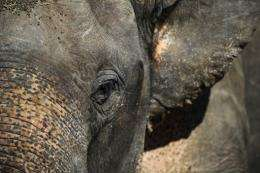 Nearly 500 elephants have been killed in a Cameroon national park in less than two months by poachers