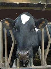 Neutrons used to study a key protein in milk