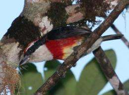 New bird species discovered in 'cloud forest' of Peru