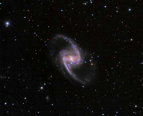 New bright and blue supernova in NGC 1365