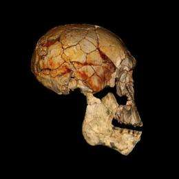 New Kenyan fossils shed light on early human evolution
