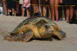 New turtle tracking technique may aid efforts to save loggerhead