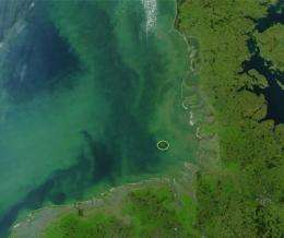 Nutrient supply after algal bloom determines the succession of the bacterial population