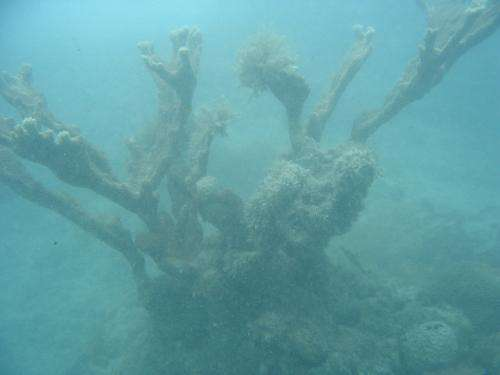 Offshore dredging severely impacts coral reefs
