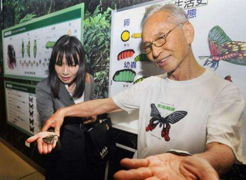 One of the only places to see butterflies in Taiwan's capital is at the museum on the campus of Cheng Kung High School