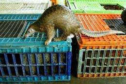 Pangolins are protected under the Convention on International Trade in Endangered Species
