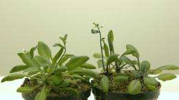 Plant enzymes reveal complex secrets
