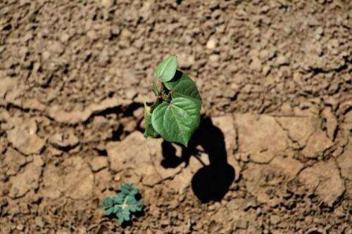 Plowing can erode the soil and kill part of the organic life that grows in it