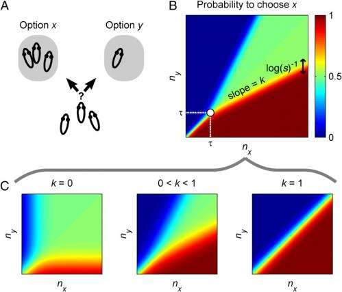 All together now: Single rule accounts for diverse decision systems in animal collectives