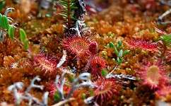 Pollution makes carnivorous plants go vegetarian
