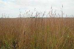 Prairie restoration also helps restore water quality