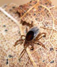 Precautions for tick-borne disease extend