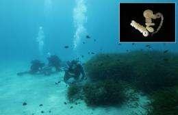 Protein analysis investigates marine worm community