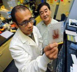 Protein could be key for drugs that promote bone growth